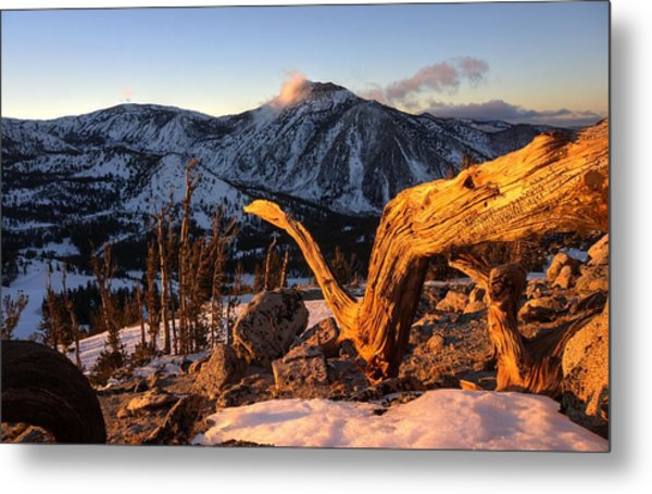 Mountain Snake Metal Print