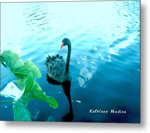 Mourning Swan Song Metal Print