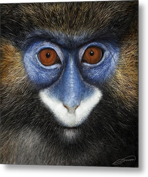 Moustached Guenon 2 Metal Print by Owen Bell
