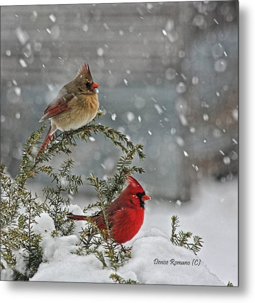 Mr. And Mrs. Cardinal Metal Print