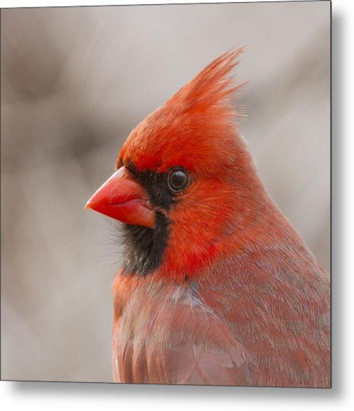 Mr Cardinal Portrait Metal Print