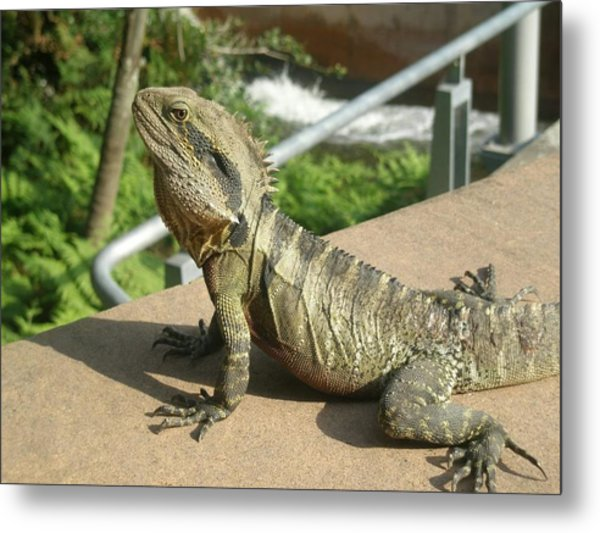 Mr Lizard Posing Metal Print