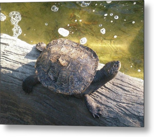 Mr Camaflauged Turtle Metal Print