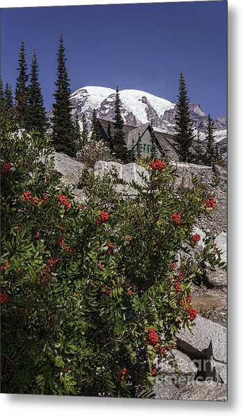 Mt Ash At Mt Rainier Metal Print