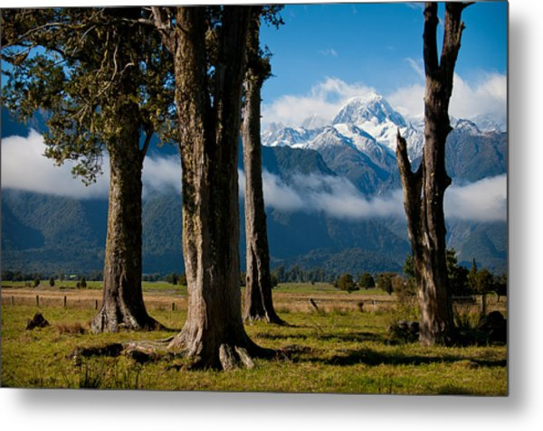Mt Cook Through Trees Metal Print