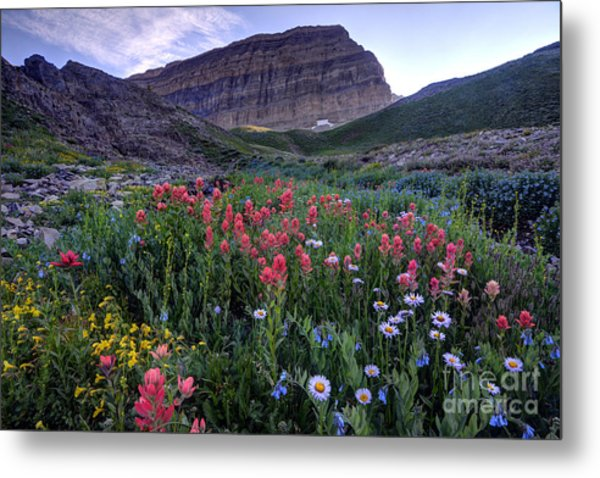 Mt. Timpanogos Wildflowers At Sunset Metal Print