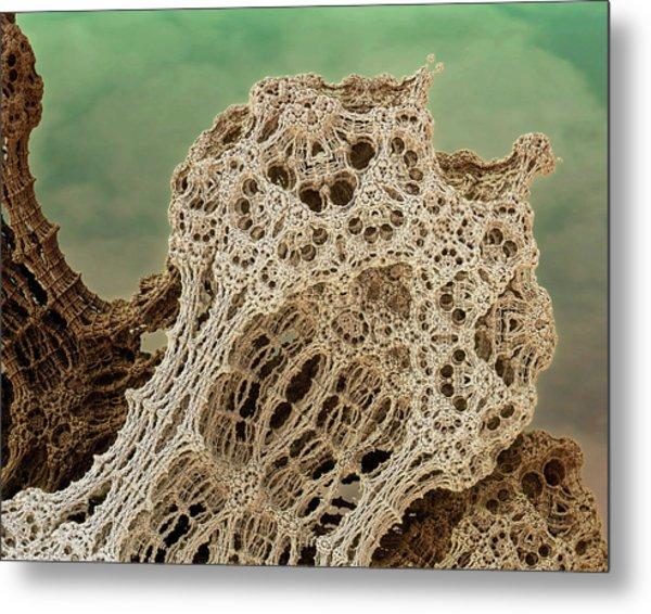 Mud Hive Metal Print