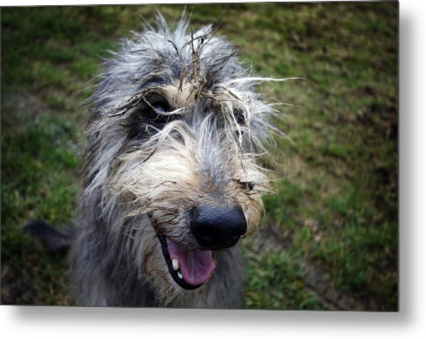 Muddy Dog Metal Print