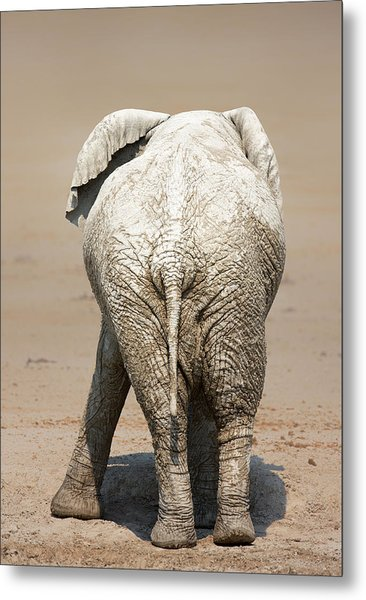 Muddy Elephant With Funny Stance  Metal Print