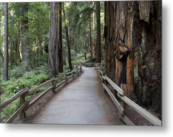 Muir Woods National Park Service Metal Print