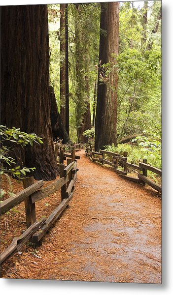 Muir Woods Trail Metal Print