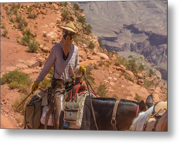 Mule Wrangler On The South Kaibab Trail Metal Print