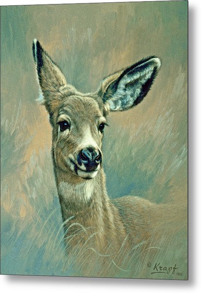 Muley Fawn At Six Months Metal Print
