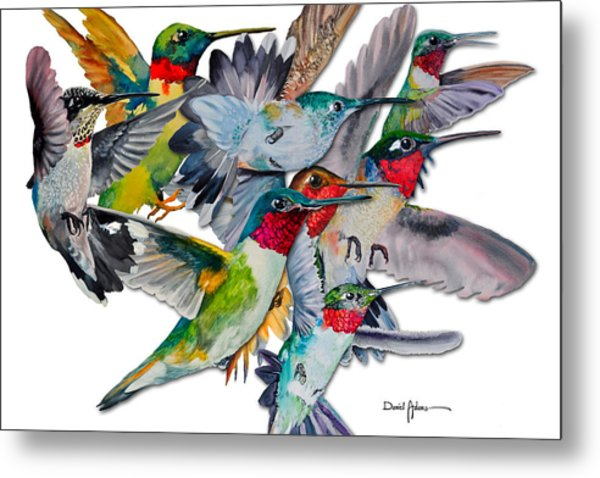 Da053 Multi-hummers By Daniel Adams Metal Print