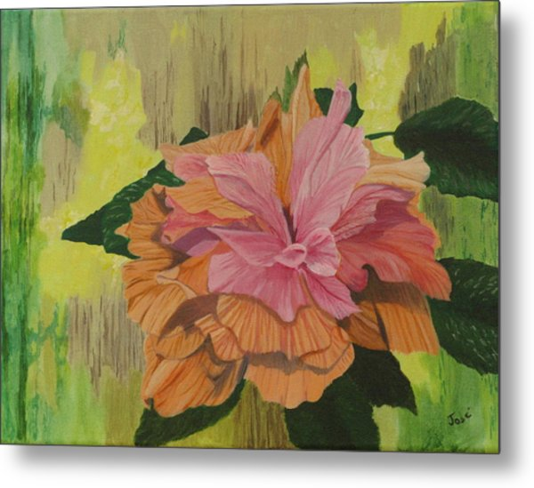 Multi-petaled Pink Peach Hibiscus Metal Print by Hilda and Jose Garrancho