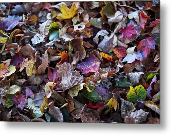 Multicolored Autumn Leaves Metal Print