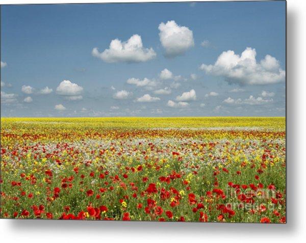 Multicoloured Field Metal Print by Tim Gainey