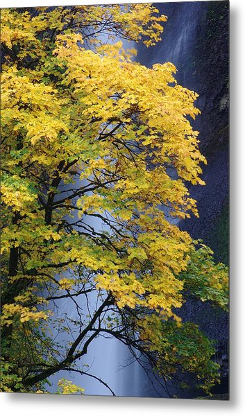 Multnomah Falls Maple Metal Print