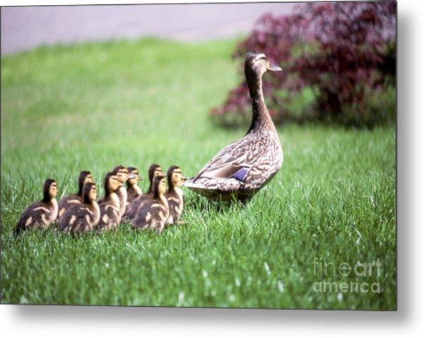 Mumma Duck And Kids Metal Print by King Wu