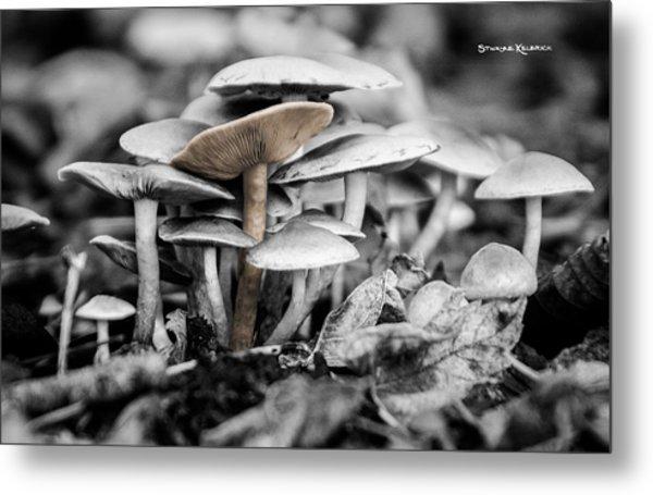 Metal Print featuring the photograph Mushrooms by Stwayne Keubrick