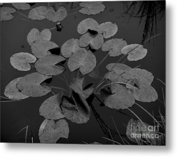 Metal Print featuring the photograph Muskeg Pond by Laura  Wong-Rose