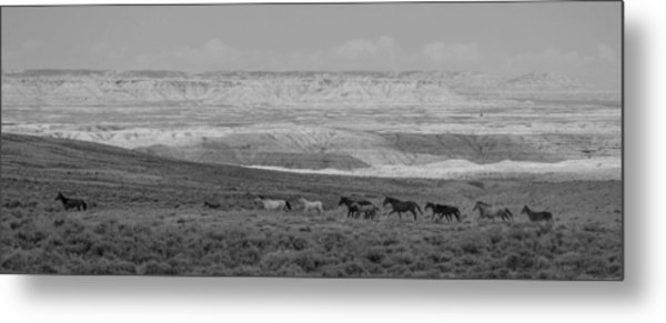 Mustangs Of The Adobe Metal Print