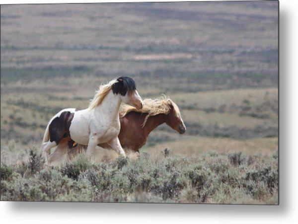 Mustangs On The Move Metal Print
