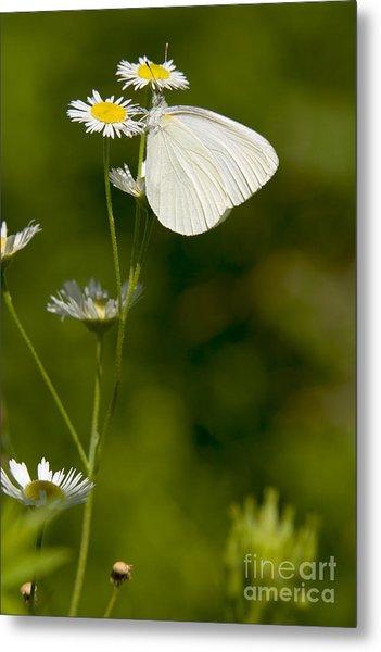 Mustard White Butterfly Metal Print