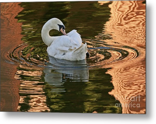Metal Print featuring the photograph Preening by Kate Brown