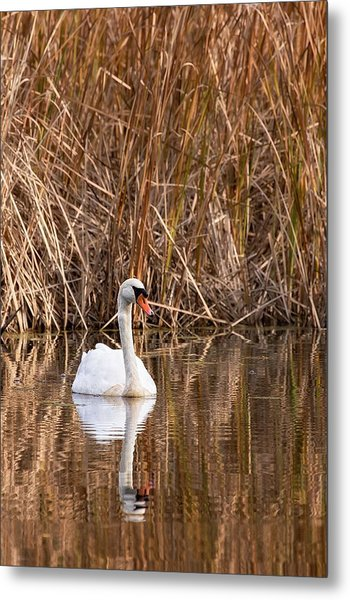 Metal Print featuring the photograph Mute Swan Reflection by Jeff Sinon