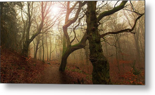 My Autumn Walk.. Metal Print