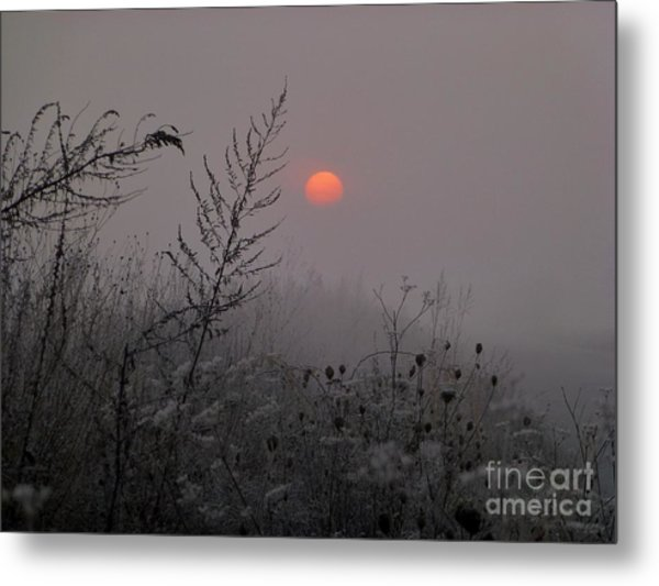 My Misty Morning Metal Print