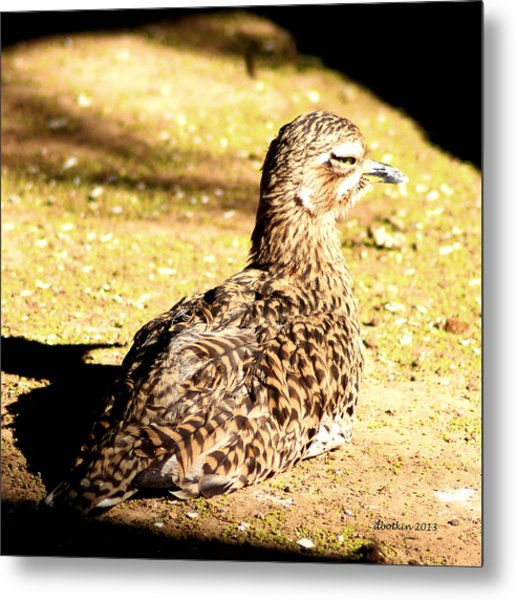 My Spot In The Sun Metal Print by Dick Botkin