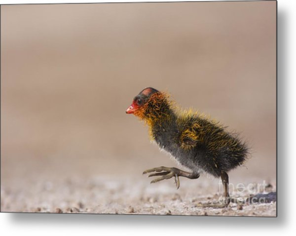 My What Big Feet You Have Metal Print by Ruth Jolly