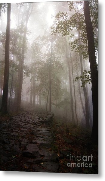 Mysterious Forest 5 Metal Print