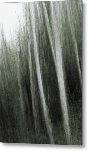 Mystic Forest Metal Print by Kim Lessel