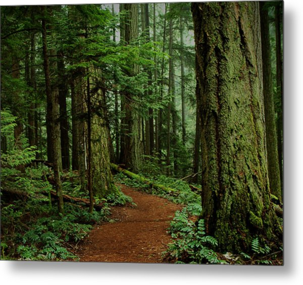 Mystical Path Metal Print
