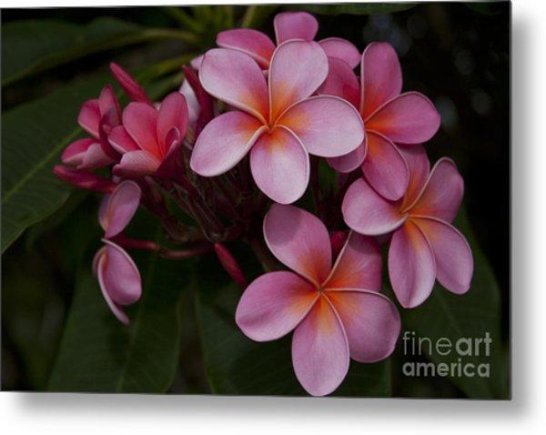 Na Lei Pua Melia O Wailua - Pink Tropical Plumeria Hawaii Metal Print