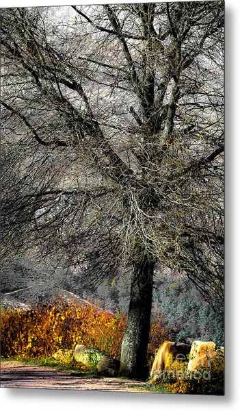 Naked For The Winter Metal Print