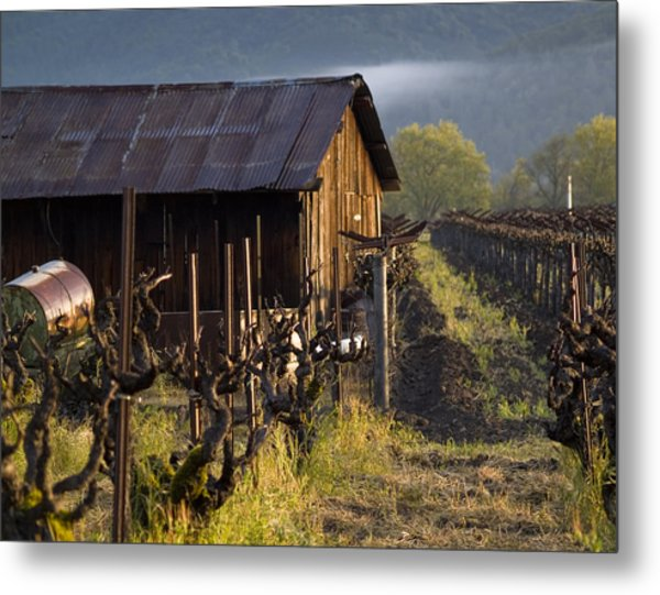 Napa Morning Metal Print