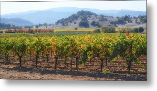 Napa Valley California Vineyard In Fall Autumn Metal Print