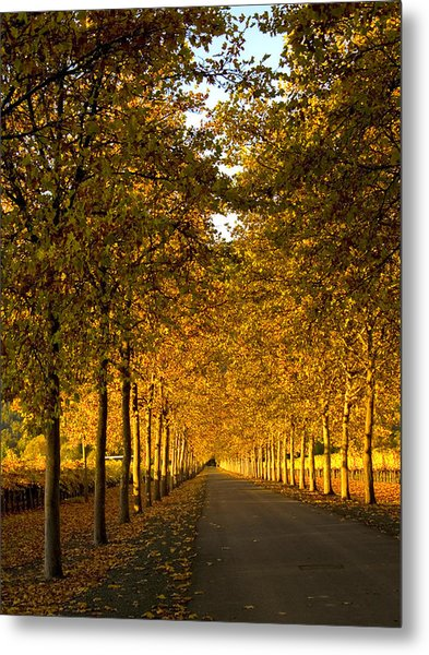 Napa Valley Fall Metal Print