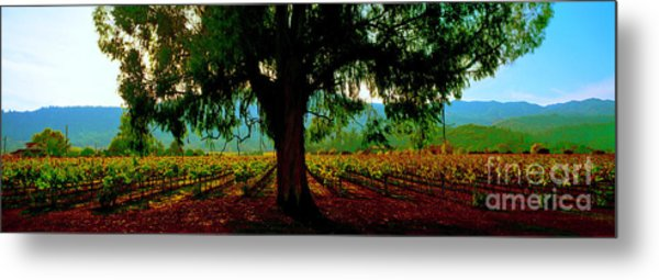 Napa Valley Winery Roadside Metal Print