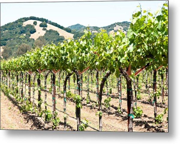 Napa Vineyard Grapes Metal Print