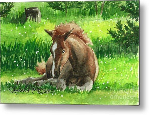 Napping Alberta Wild Foal Metal Print