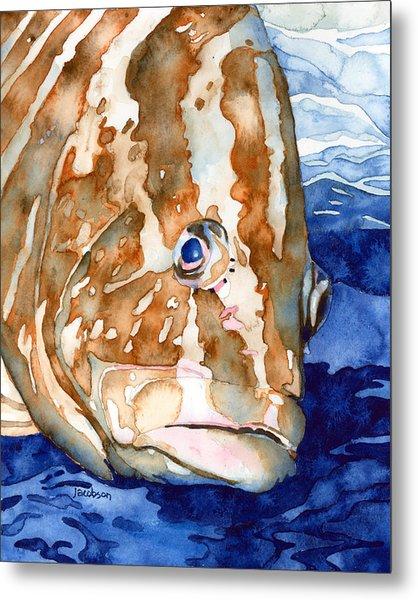 Nassau Grouper Portrait Metal Print