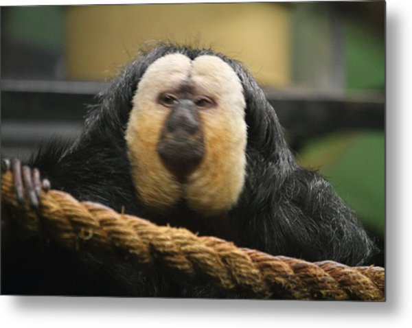 National Zoo - Mammal - 01136 Metal Print by DC Photographer