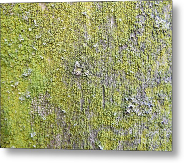 Natural Abstract 1 Old Fence With Moss Metal Print