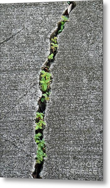 Nature Always Wins Metal Print