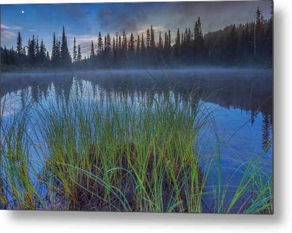 Nature Awakes Metal Print